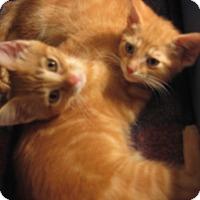 Adopt A Pet :: FRICK & FRACK - 2014 - Hamilton, NJ