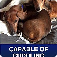Adopt A Pet :: Luke & Beau - Morrisville, PA