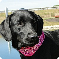 Adopt A Pet :: Daisy - Lewisville, IN
