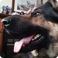 Adopt A Pet :: Cesar - Green Cove Springs, FL