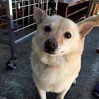 Adopt A Pet :: Ella - Stone Mountain, GA