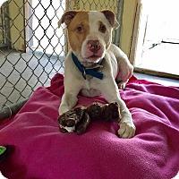 Adopt A Pet :: MARCO - Cadiz, OH