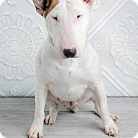 Adopt A Pet :: Rosie - Denver, CO