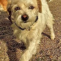 Adopt A Pet :: Trevor - Lancaster, CA