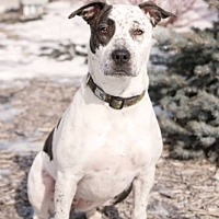 Adopt A Pet :: Fiona - Winnipeg, MB