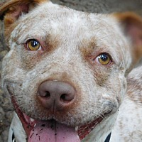Adopt A Pet :: EGGO - Millerstown, PA