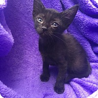 Adopt A Pet :: Midnight - Waggaman, LA