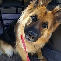 Adopt A Pet :: Ansel - Guthrie, OK