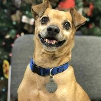 Adopt A Pet :: Liam - The Dalles, OR