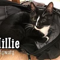Adopt A Pet :: Millie - Merrifield, VA