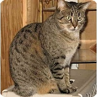 Adopt A Pet :: Lydia - Cincinnati, OH