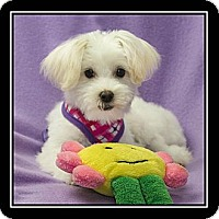 Adopt A Pet :: Valentina - Ft. Bragg, CA