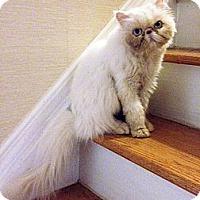 Adopt A Pet :: Poseidon - Farmingdale, NY