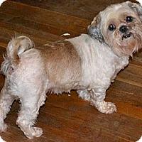 Adopt A Pet :: Casey - Greensboro, NC