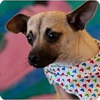 Adopt A Pet :: Hansel - Poway, CA