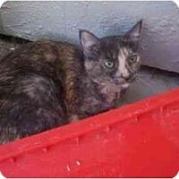 Adopt A Pet :: Susie - El Cajon, CA