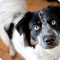 Adopt A Pet :: Waldorf - New York, NY