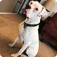 Adopt A Pet :: Teddy James - Dayton, OH