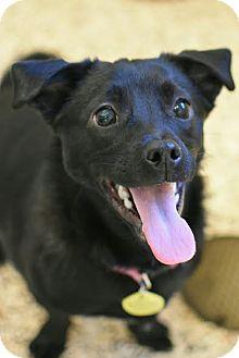 Chihuahua Mix Dog for adoption in Aiken, South Carolina - Tinker
