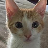Adopt A Pet :: Sunkist - Spring, TX