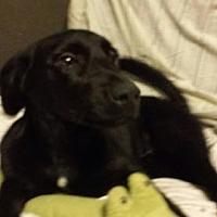 Adopt A Pet :: Winston - Olympia, WA