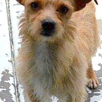 Adopt A Pet :: Austin - Boulder, CO