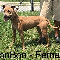 Adopt A Pet :: Bon Bon - Waycross, GA
