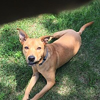 Adopt A Pet :: Spencer D3456 - Shakopee, MN