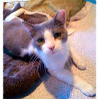 Adopt A Pet :: Toby (Guest) - Owings Mills, MD