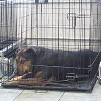 Adopt A Pet :: April - Weatherford, TX