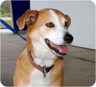 Collie Mix Dog for adoption in McKinney, Texas - Tammy