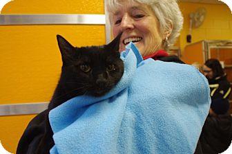 Domestic Shorthair Cat for adoption in Elyria, Ohio - Mama
