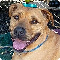 Adopt A Pet :: Clyde - Carmel, NY