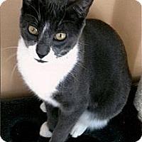 Adopt A Pet :: Olivia - Medway, MA