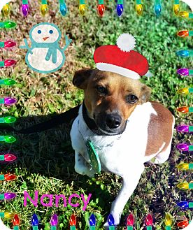 Rat Terrier Mix Dog for adoption in Beaumont, Texas - Nancy