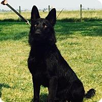 Adopt A Pet :: Jet - Hamilton, MT