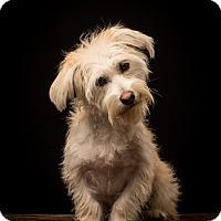 Adopt A Pet :: Barnaby - MEET HIM!! - Norwalk, CT