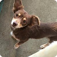 Adopt A Pet :: Tanner - adoption pending - Gig Harbor, WA