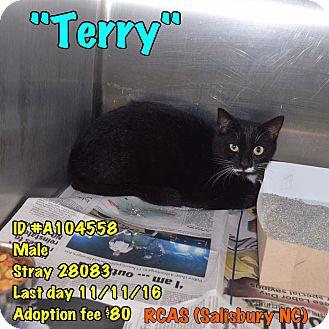 Domestic Shorthair Cat for adoption in Salisbury, North Carolina - Terry