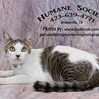 Adopt A Pet :: Thomas - Greeneville, TN