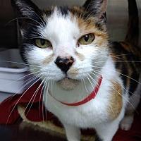 Adopt A Pet :: Starla - Palo Cedro, CA