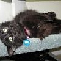 Adopt A Pet :: Molly - Powell, OH