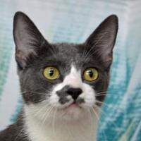 Adopt A Pet :: Bobbi - Englewood, FL