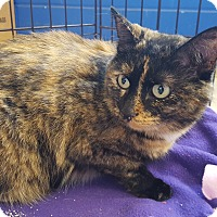 Adopt A Pet :: Lily Belle - Flushing, MI