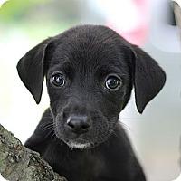 Adopt A Pet :: Lindsay - South Jersey, NJ