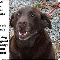 Adopt A Pet :: # 577-09 @ Animal Shelter - Zanesville, OH