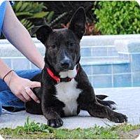 Adopt A Pet :: Mazy - Orlando, FL