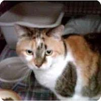Adopt A Pet :: Gwyneth - Erie, PA