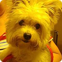 Adopt A Pet :: Lily - Conroe, TX
