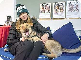Shepherd (Unknown Type) Mix Dog for adoption in Jersey City, New Jersey - Tunde Adebimpe